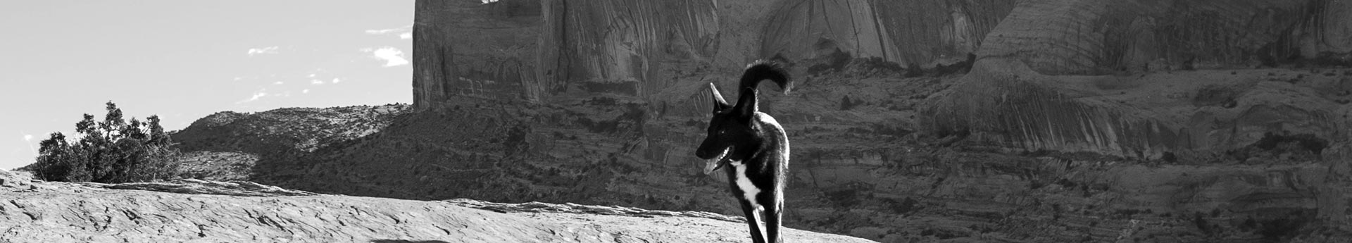ORIJEN Puppy Large Dog Food - Black dog in the Moab desert - Fearless Iro in Moab, Utah